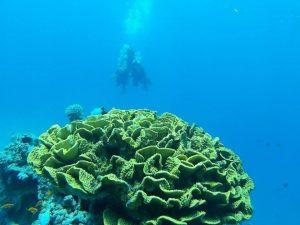 Aqaba, scuba
